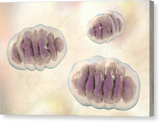 3d Visualization Canvas Print - Mitochondria by Kateryna Kon/science Photo Library