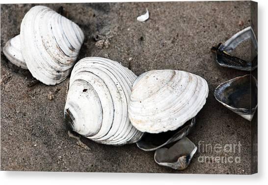 Mixed Shells Canvas Print by John Rizzuto