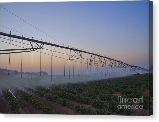 Negev Desert Canvas Print - Mobile Watering System At Sunrise  by Efi Bar
