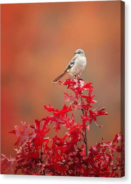 Mockingbird Canvas Print - Mockingbird Autumn by Bill Wakeley