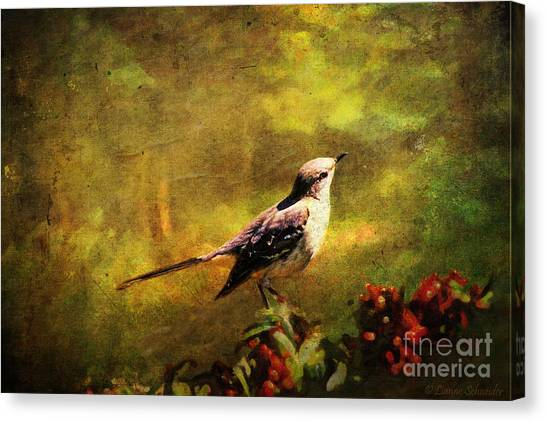 Mockingbird Canvas Print - Mockingbird Have You Heard... by Lianne Schneider