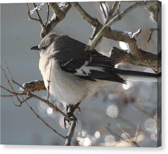 Mockingbird In Winter Canvas Print