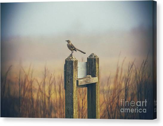 Mockingbirds Canvas Print - Mockingbird by Katya Horner