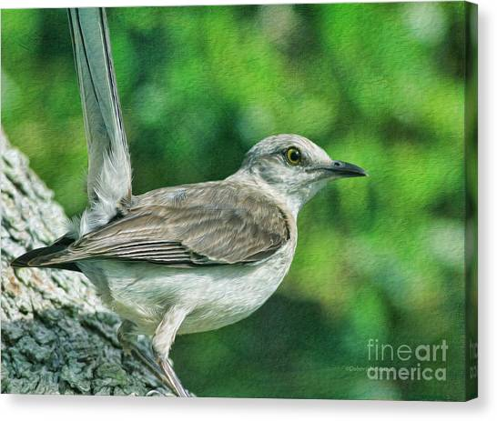 Mockingbird Canvas Print - Mockingbird Pose by Deborah Benoit