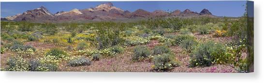 Mojave Desert Floral Display Canvas Print
