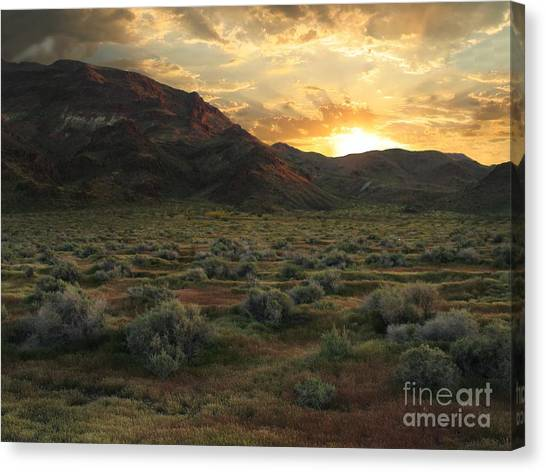 Mountain Sunsets Canvas Print - Mojave Desert Spring Glory by Stu Shepherd