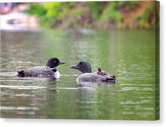 Mom And Dad Loon With Baby On Back Canvas Print