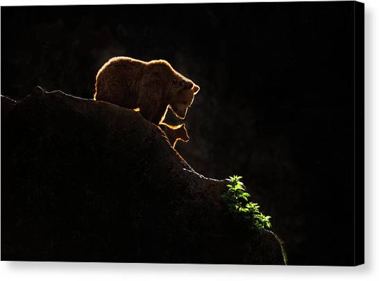 Brown Bears Canvas Print - Mom Bear With Cub by Xavier Ortega