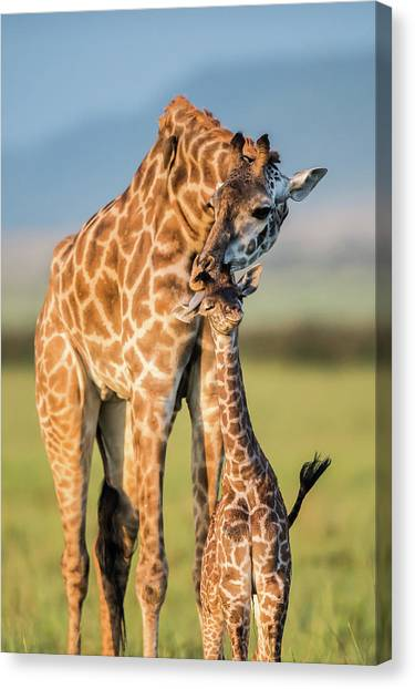 Camouflage Canvas Print - Mom Love by Mohammed Alnaser