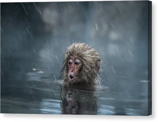 Monkeys Canvas Print - Mom! by Takeshi Marumoto