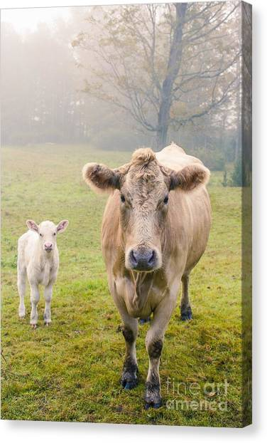 Farm Landscape Canvas Print - Momma And Baby Cow by Edward Fielding