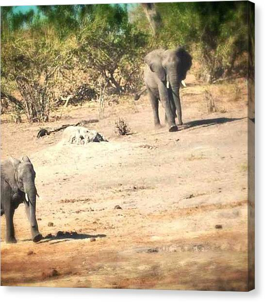 Beagles Canvas Print - #momma #baby #elephant #botswana by Caitlin Beagle
