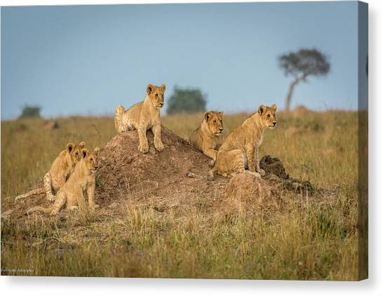 Kenyan Canvas Print - Mom's Coming Back - Dinner Is Almost Here. by Jeffrey C. Sink