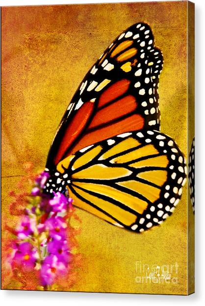 Monarch Butterfly Color Splash Sunset Canvas Print