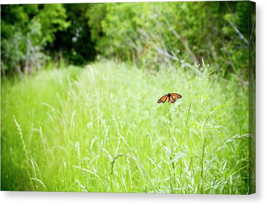 Monarch Butterfly In Green Field Canvas Print