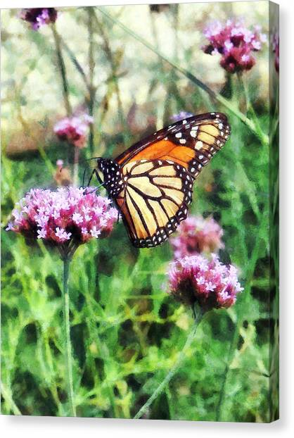 Monarch Butterfly On Pink Lantana Canvas Print by Susan Savad
