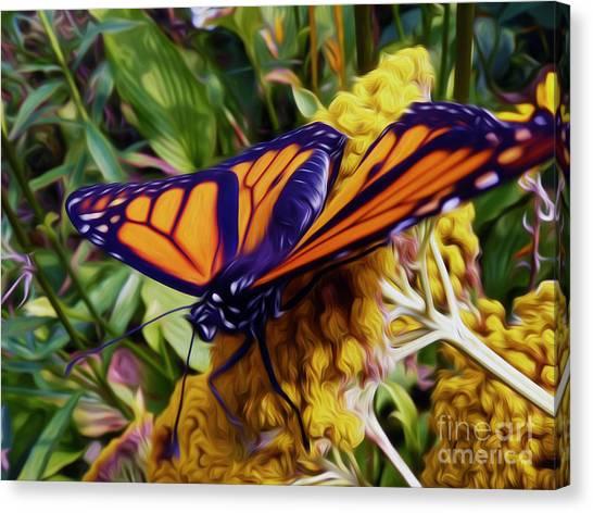 Monarch On Yarrow Canvas Print