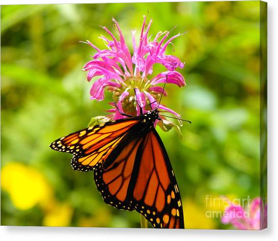 Monarch Under Flower Canvas Print