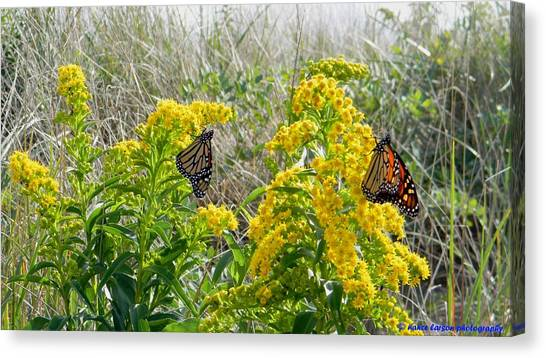 Monarchs On The Beach Canvas Print