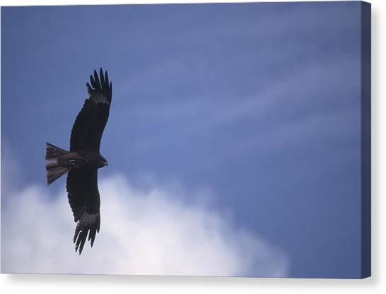 Condors Canvas Print - Mongolia by Anonymous