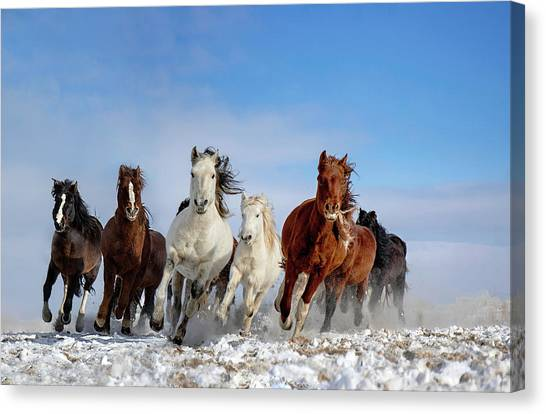 Winter Canvas Print - Mongolia Horses by Libby Zhang
