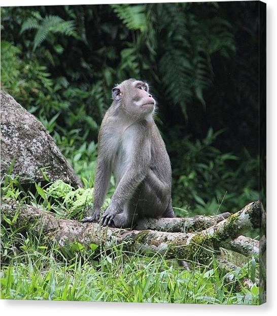 Apes Canvas Print - #monkey #ape #instagood #wild by Rudi Gunawan