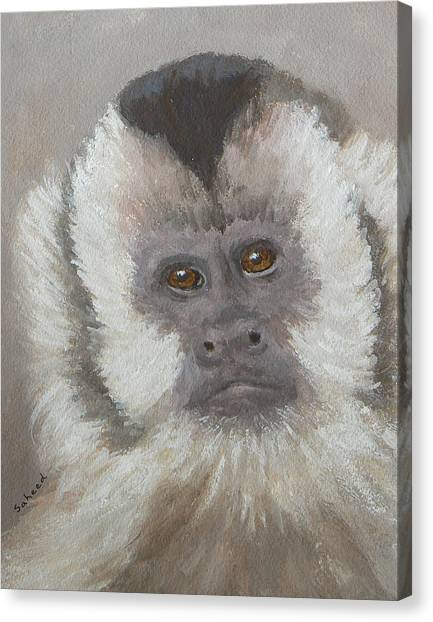 Monkey Gaze Canvas Print