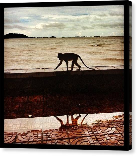 Law Enforcement Canvas Print - Monkey Reflection by Darren O' Dea