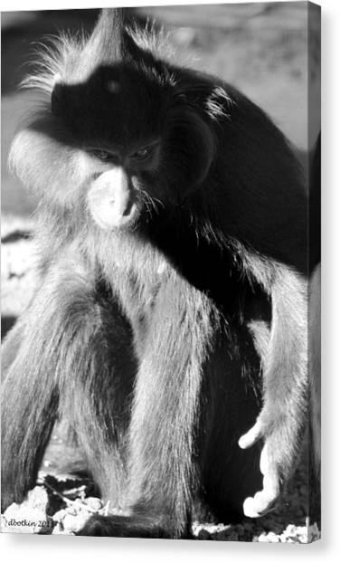 Monkey See Monkey Do Canvas Print by Dick Botkin