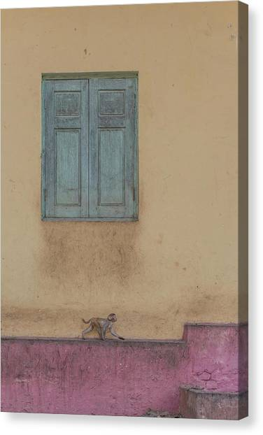 Monkeys Canvas Print - Monkey Stroll by Patrick Dessureault