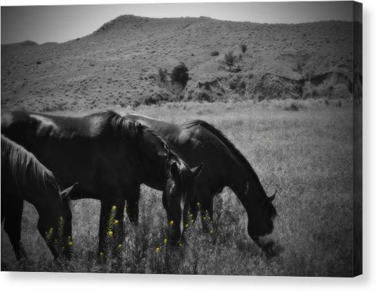 Montana Horses Canvas Print