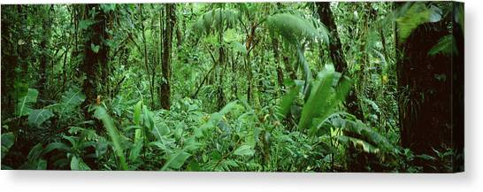 Monteverde Canvas Print - Monteverde Cloud Forest Reserve, Costa by Panoramic Images
