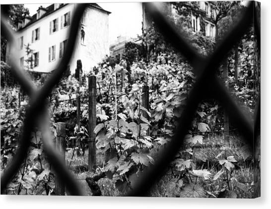 Black and white vineyard canvas print montmartre vineyard by georgia fowler