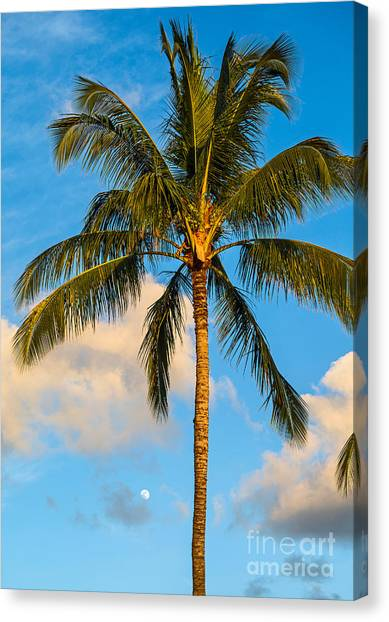 Palm Trees Sunsets Canvas Print - Moon And Palm by Jamie Pham