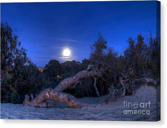 Moon Branch Canvas Print