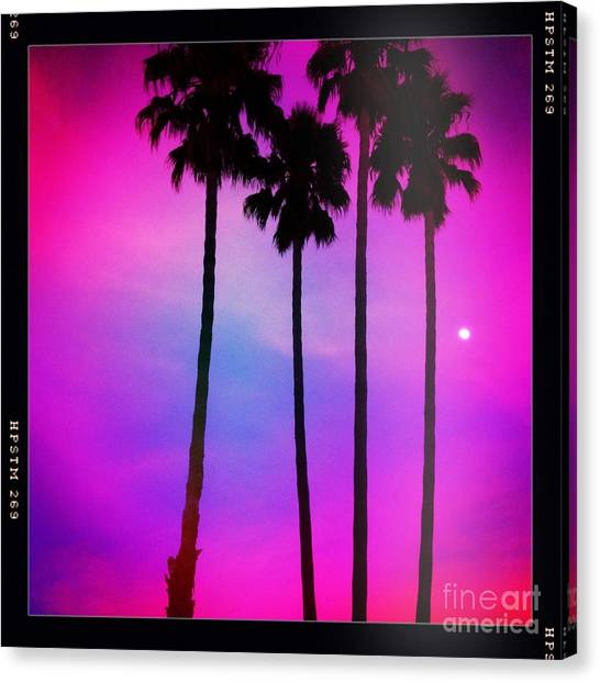 Moon Palms Canvas Print