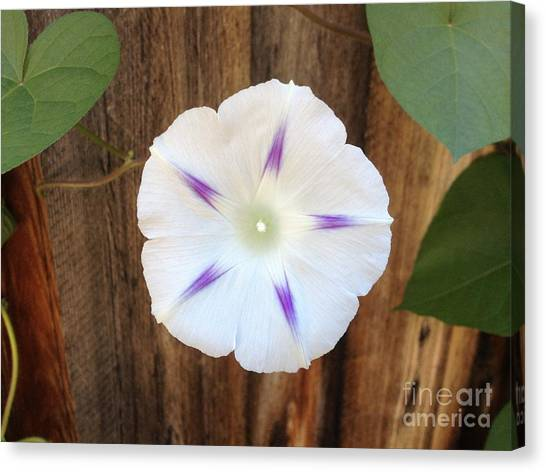Moonflower On Wood Canvas Print by Tayt Dame