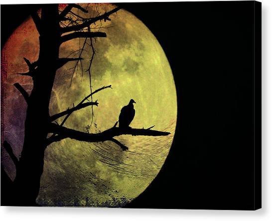 Vultures Canvas Print - Moonlight Mile by Bill Cannon