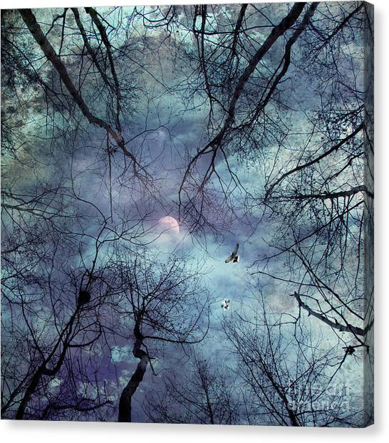 Forest Canvas Print - Moonlight by Stelios Kleanthous