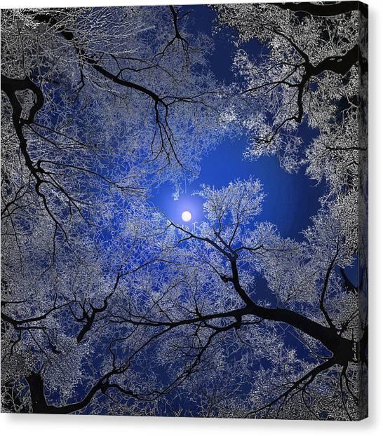 Moonlight Trees Canvas Print by Igor Zenin