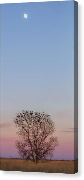 Moonrise Over Blackbirds Canvas Print