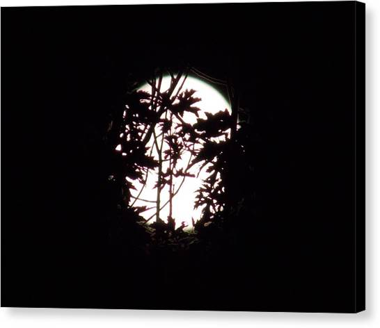Moonshine 9 Beyond The Forest Canvas Print
