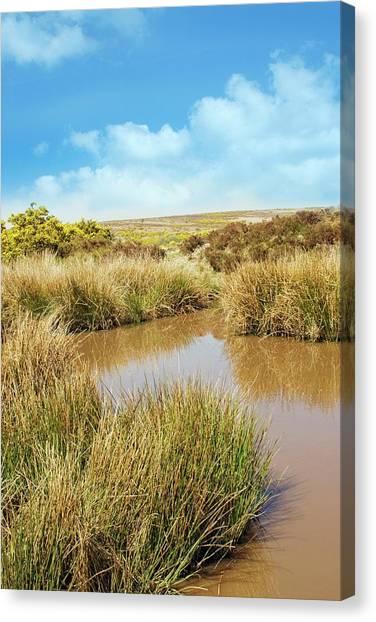 Moorland Canvas Print - Moorland Pond by David Aubrey