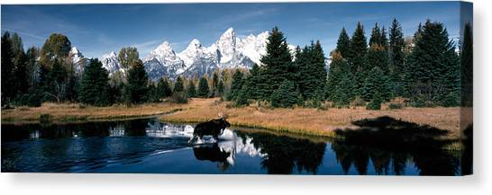 Wy Canvas Print - Moose & Beaver Pond Grand Teton by Panoramic Images