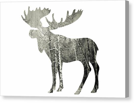 Moose Canvas Print - Moose by Amber Berninger