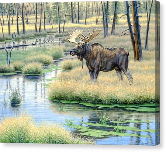Marshes Canvas Print - Moose Country by Paul Krapf