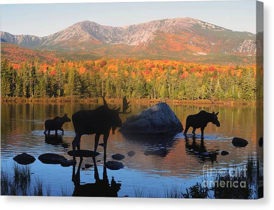 Moose Family Scenic Canvas Print