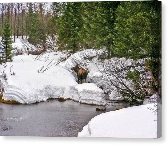 Moose In Alaska Canvas Print