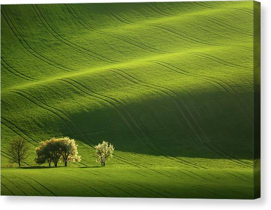 Rolling Hills Canvas Print - Moravian Waves by Daniel ??e??icha