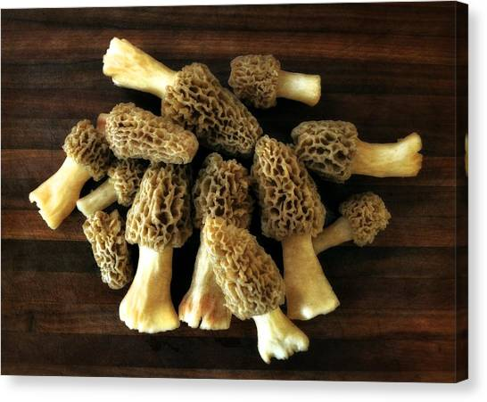 Morel Mushrooms Canvas Print